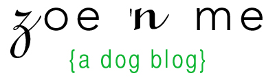 zoe 'n me {a dog blog}