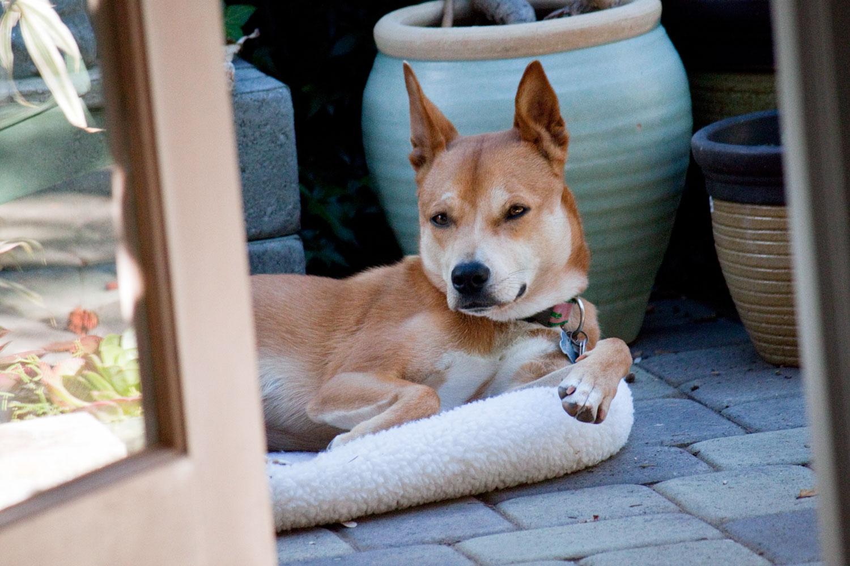 Zoe 'n Me {a dog blog} My reprieve | Jordan benShea | Santa Barbara, California