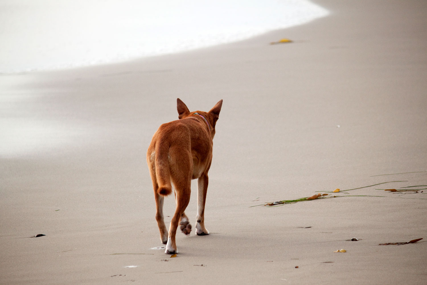 Zoe 'n Me {a dog blog} Thirty fearless pounds | Jordan benShea | Santa Barbara, California