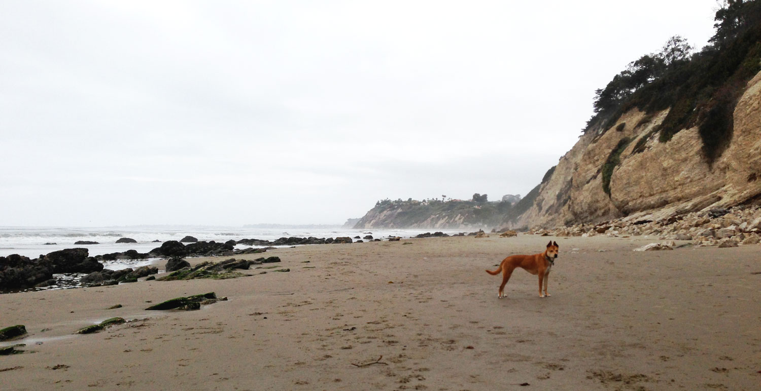 Zoe 'n Me {a dog blog} Early am beach adventures | Jordan benShea | Santa Barbara, California