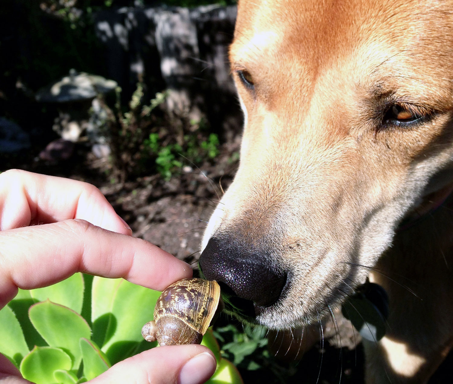 Zoe 'n Me {a dog blog} Snail hunter | Jordan benShea | Santa Barbara, California