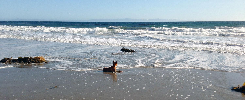 Zoe 'n Me {a dog blog} TGIF | Jordan benShea | Santa Barbara, California