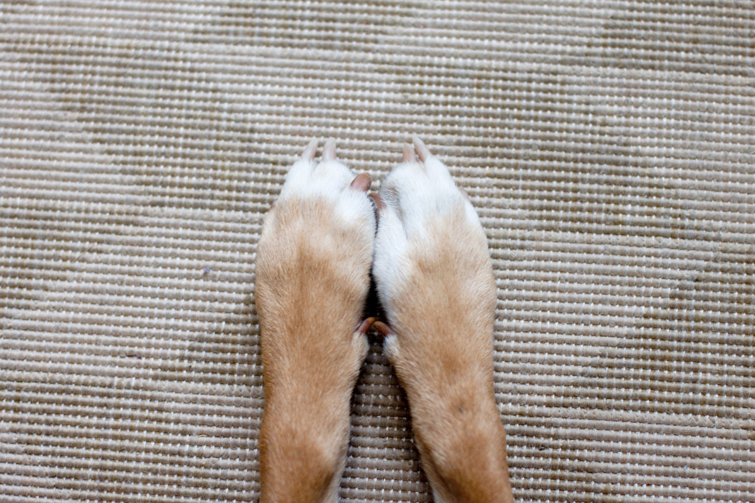 Zoe 'n Me {a dog blog} Best foot forward | Jordan benShea | Santa Barbara, California