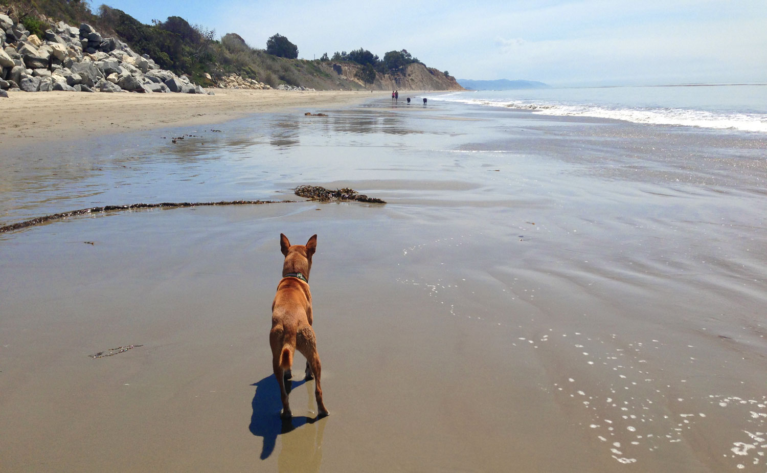 Zoe 'n Me {a dog blog} Caution ahead | Jordan benShea | Santa Barbara, California