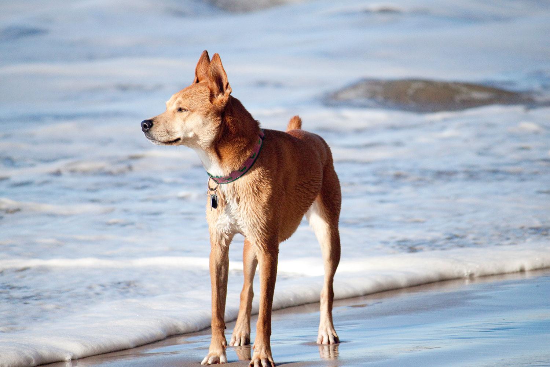 Zoe 'n Me {a dog blog} Holding on tight | Jordan benShea | Santa Barbara, California