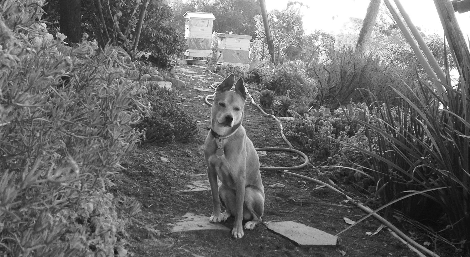 Zoe 'n Me {a dog blog} | 31 in 31 | Jordan benShea | Santa Barbara, California