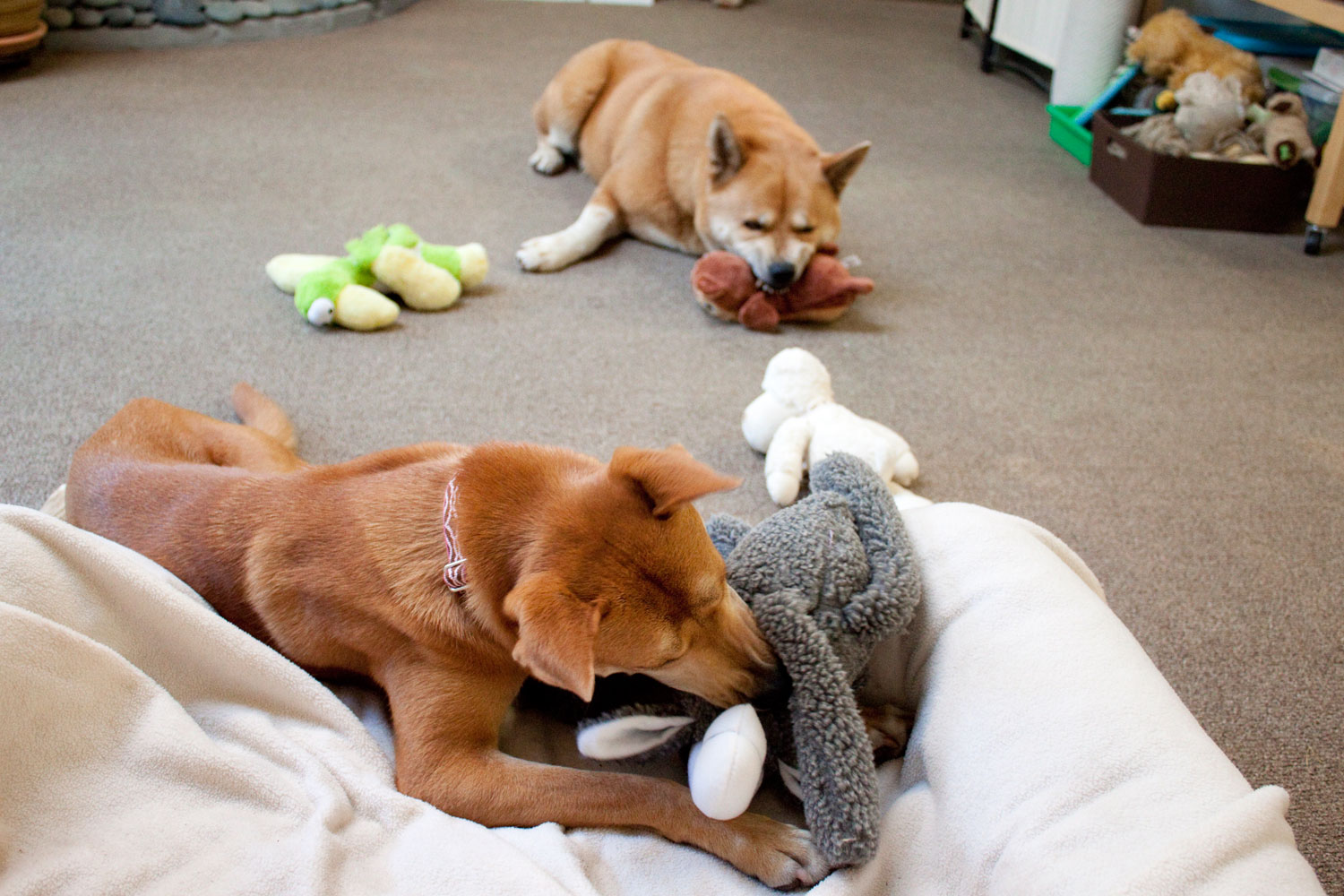 Zoe 'n Me {a dog blog} Slumber party | Jordan benShea | Santa Barbara, California