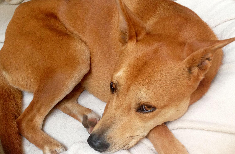 Zoe 'n Me {a dog blog} Uno dos tres | Jordan benShea | Santa Barbara, California