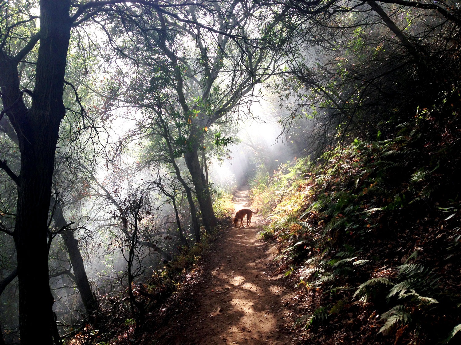 Zoe 'n Me {a dog blog} Magical Forest | Jordan benShea | Santa Barbara, California