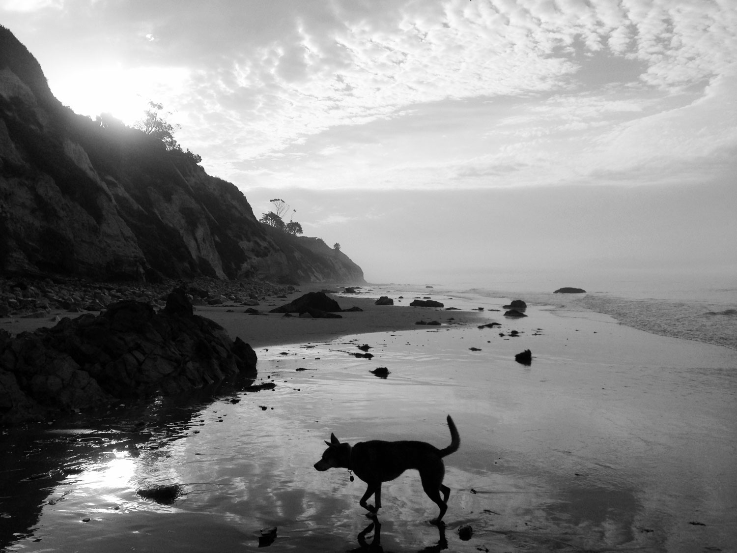 Zoe 'n Me {a dog blog} Wordless Wednesday | Jordan benShea | Santa Barbara, California