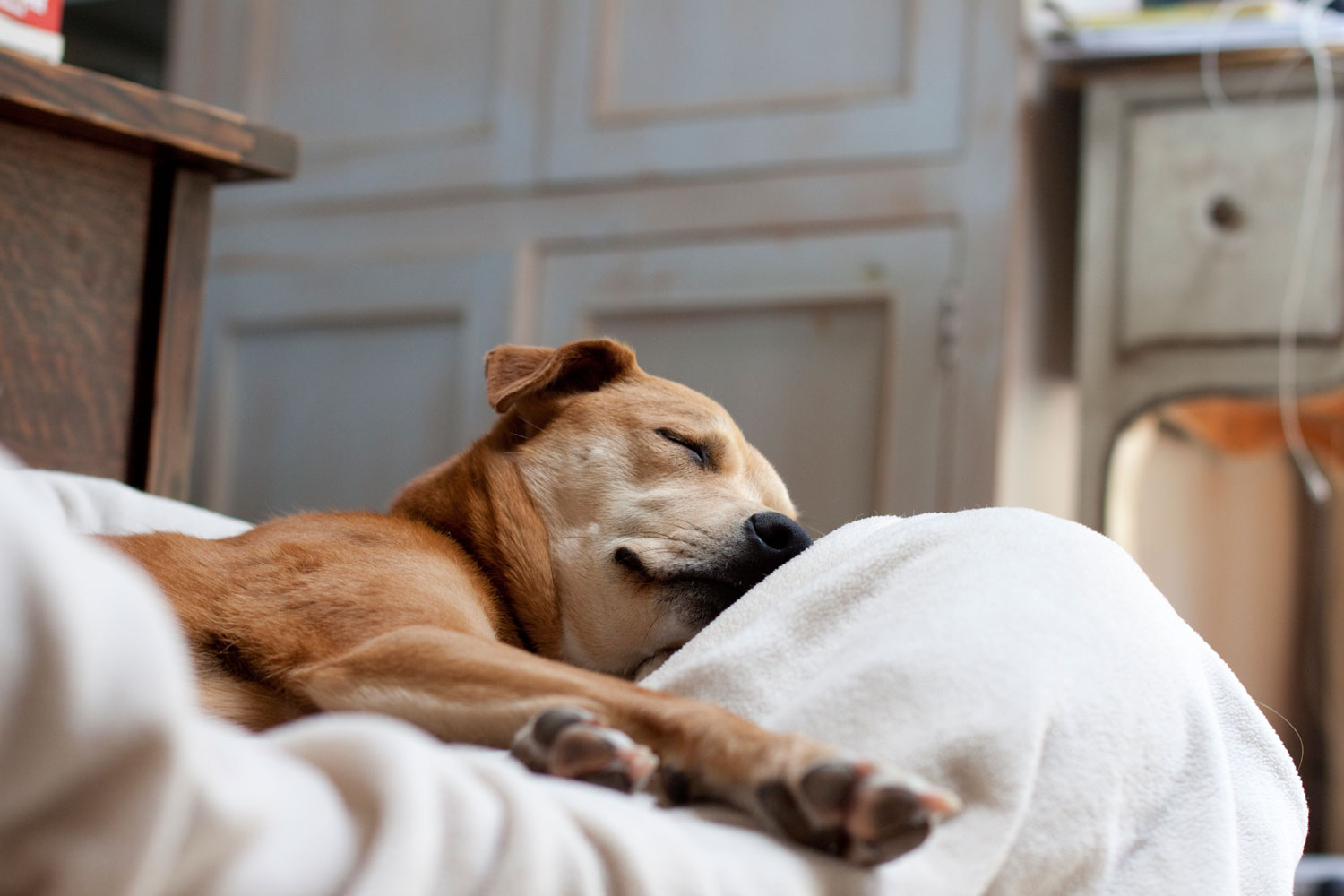 Zoe 'n Me {a dog blog} The bed of choice | Jordan benShea | Santa Barbara, California