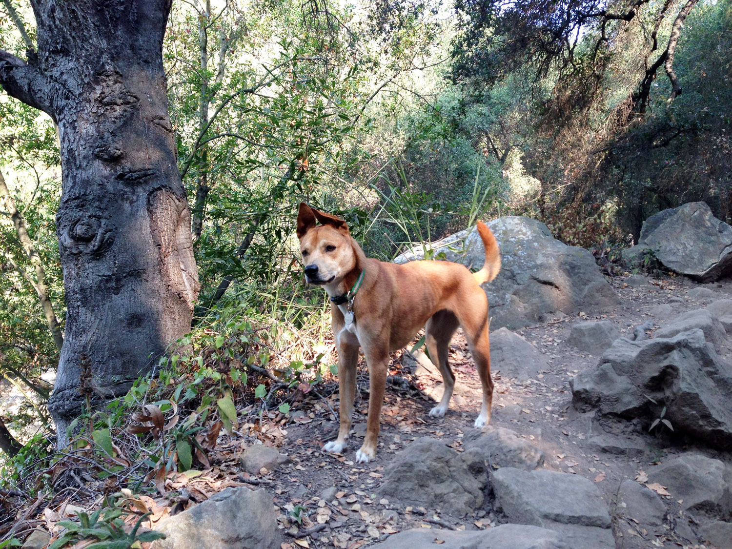 Zoe 'n Me {a dog blog} The all together pack | Jordan benShea | Santa Barbara, California