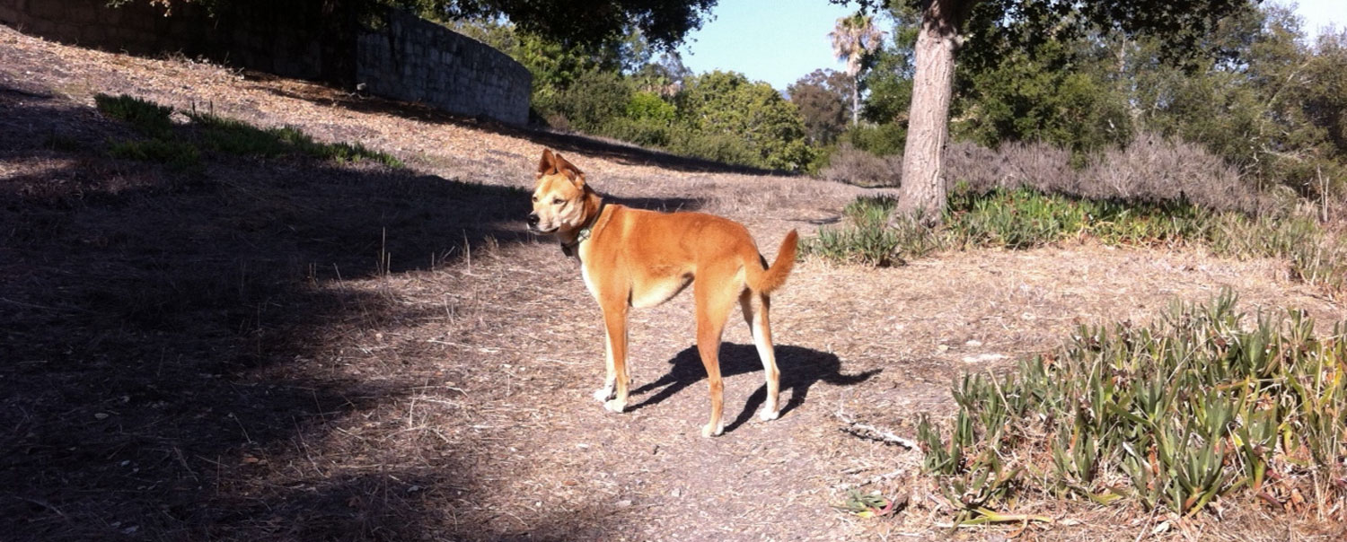 Zoe 'n Me {a dog blog} BC Bound | Jordan benShea | Santa Barbara, California
