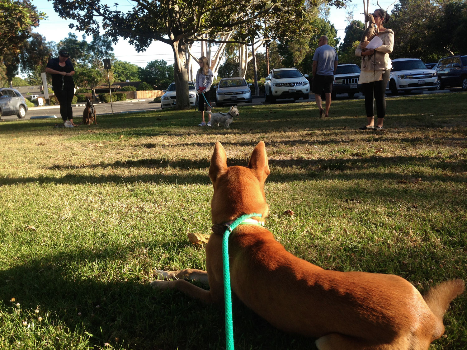 Zoe 'n Me {a dog blog} Back to School | Jordan benShea | Santa Barbara, California