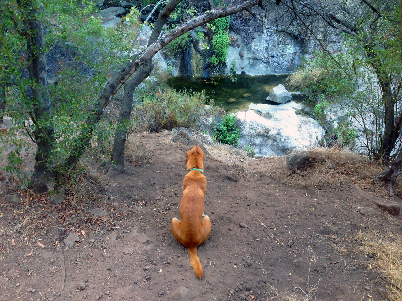 Zoe 'n Me {a dog blog} Balance | Jordan benShea | Santa Barbara, California