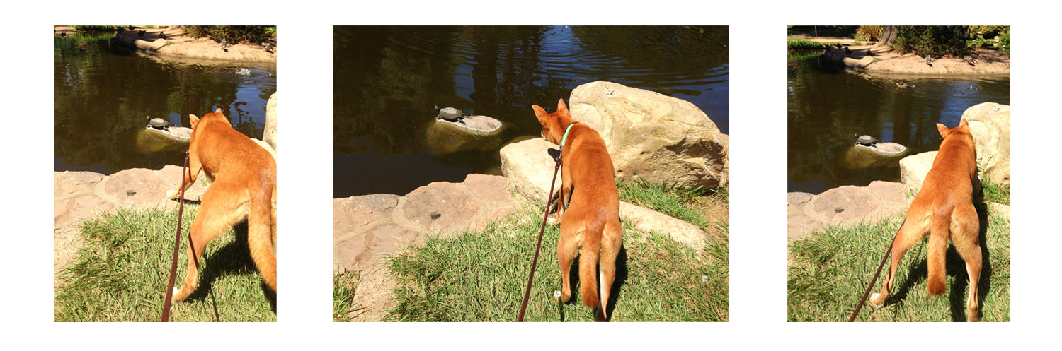 Zoe 'n Me {a dog blog} The Turtle Contingency | Jordan benShea | Santa Barbara, California