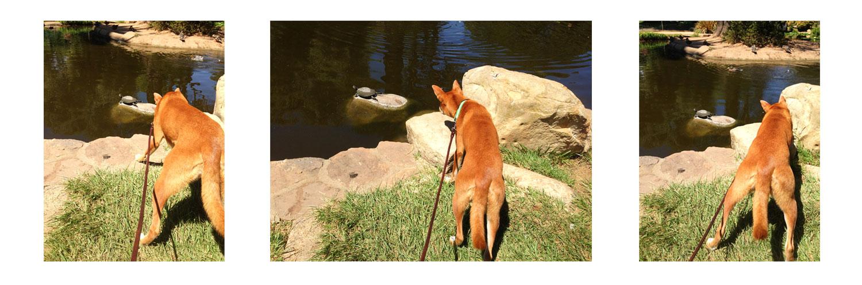 Zoe 'n Me {a dog blog} The Turtle Contingency | Jordan benShea | Santa Barbara, California