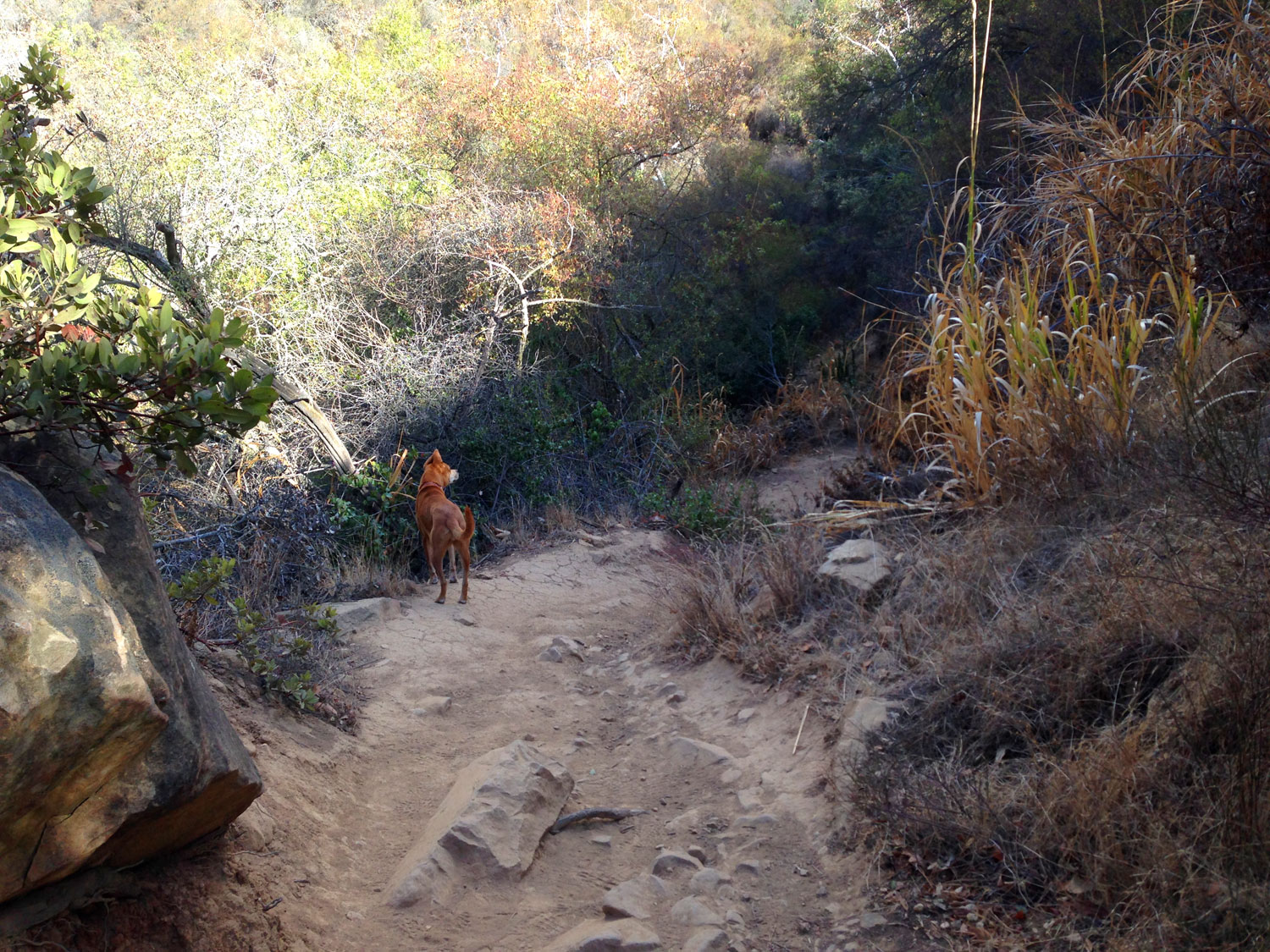 Zoe 'n Me {a dog blog} Adios Sunday Blues | Jordan benShea | Santa Barbara, California