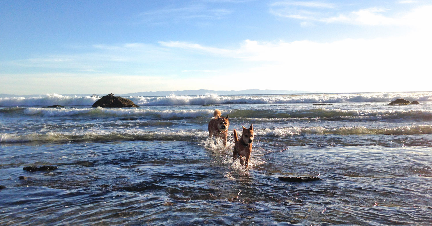 Zoe 'n Me {a dog blog} Stand by Your Man | Jordan benShea | Santa Barbara, California