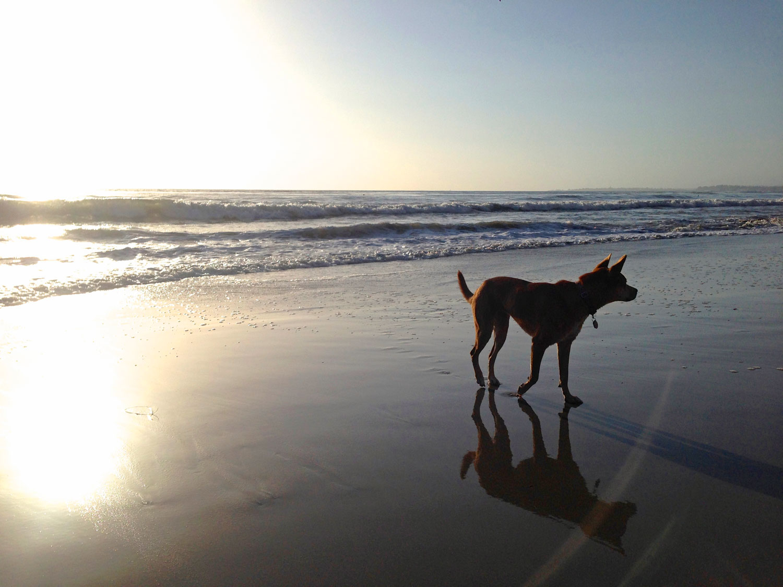 Zoe 'n Me {a dog blog} Wordless Wednesday | Jordan benShea | Santa Barbara, California