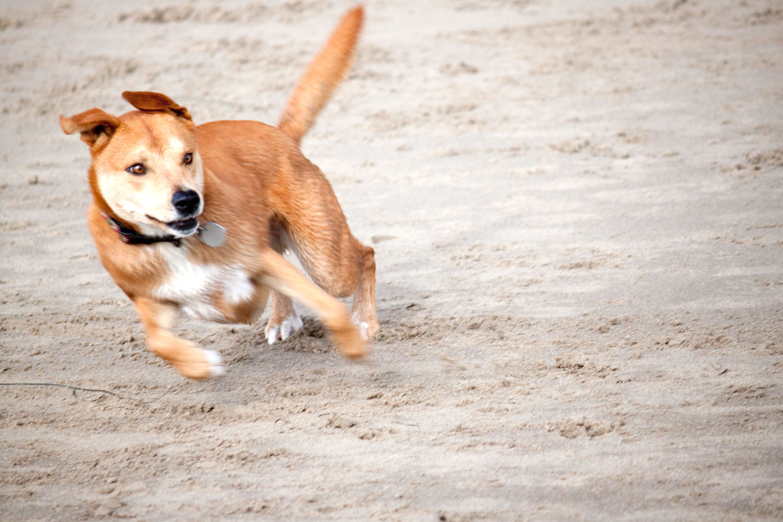 Zoe 'n Me {a dog blog} Balancing Act | Jordan benShea | Santa Barbara, California